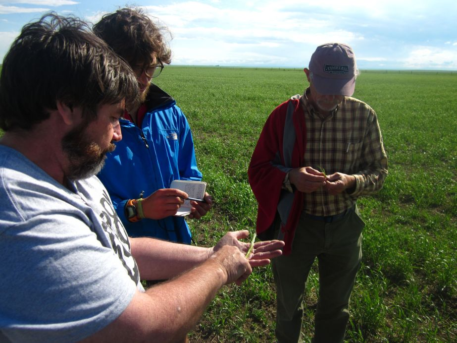 Rick, Jim, and I standing in a field of organic garbanzos. *Photo*: Neil Baunsgard.