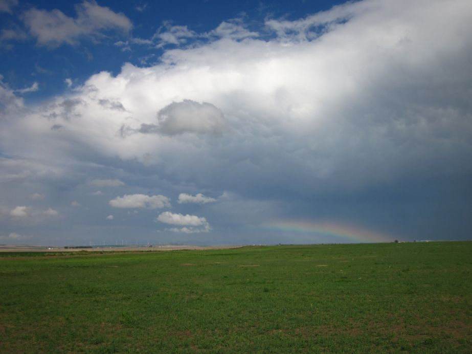 Obligatory snapshot of the rainbow that appeared after a shower passed over Rick's farm. Photo: Neil Baunsgard.